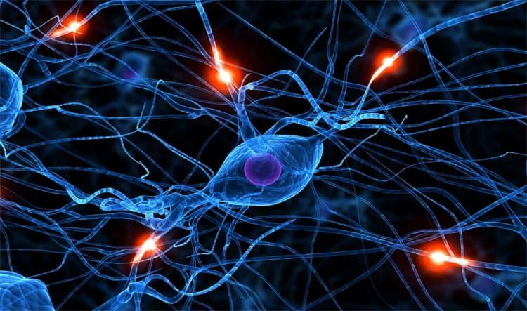 клеток головного мозга