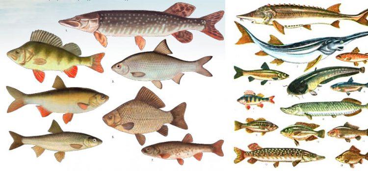Туркиным, так и известным в то время рыболовом и рыболовным автором.