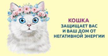 кошка защищает хозяина